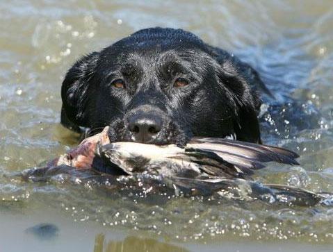 Dog Training Greenwood Ms